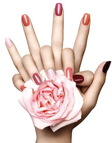 haende mit lackierten fingernaegeln halten eine rose